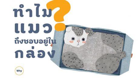 แมว กล่อง